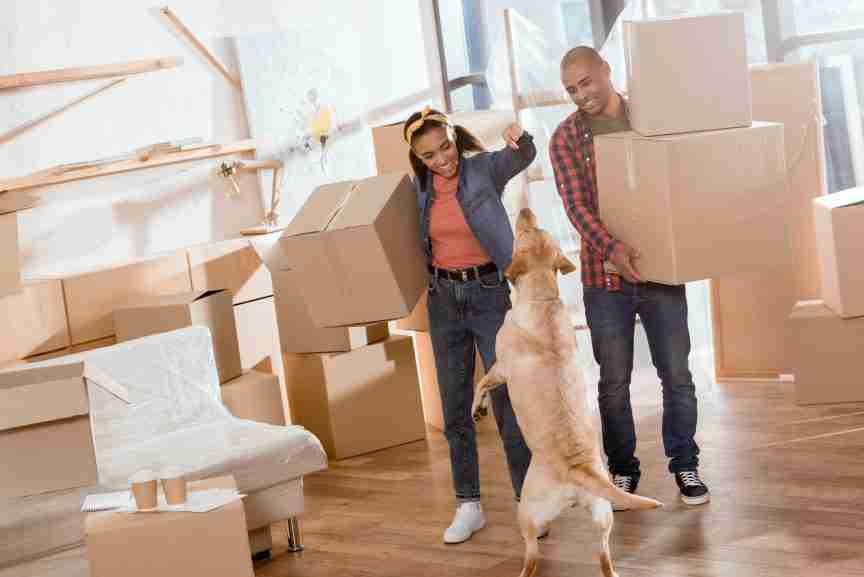 Moving House With Your Pet Dog
