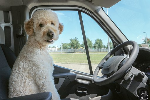 Traveling Tips for Dog Owners