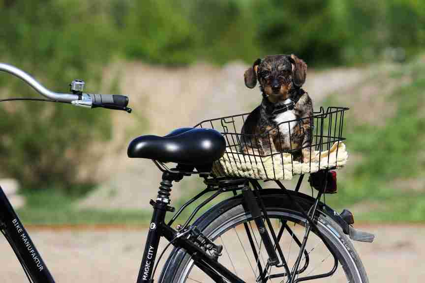 bike with dog