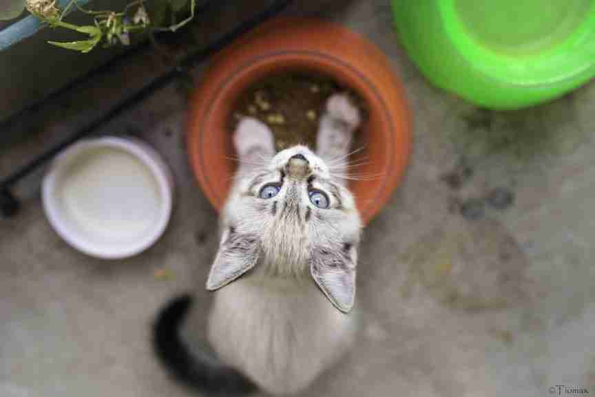 cat feeding pet nutrition