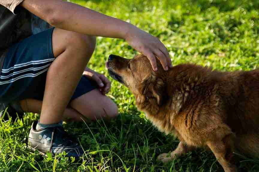Managing Joint Pain in Dogs