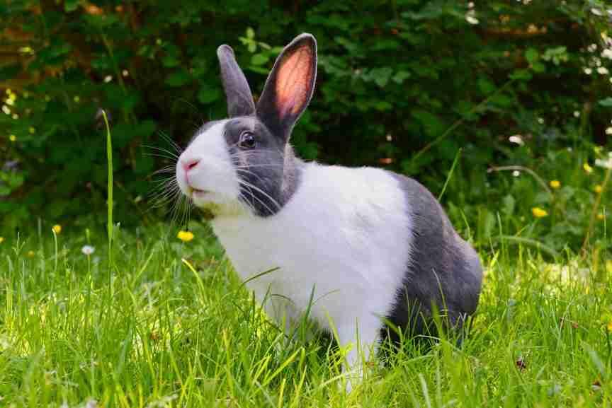 rabbit emotional support animal