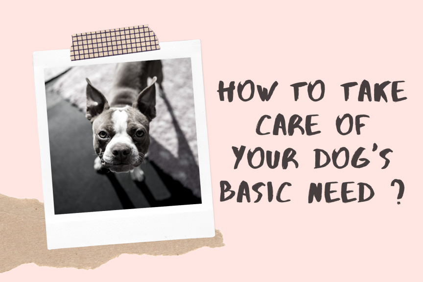 How to Take Care of Your Dog's Basic Need _