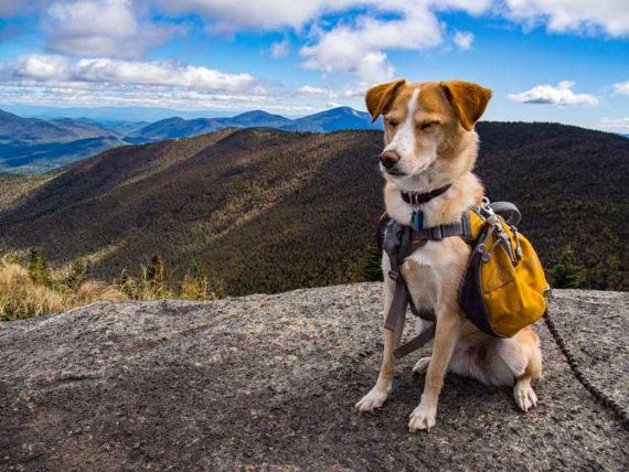 backpacking with your dog