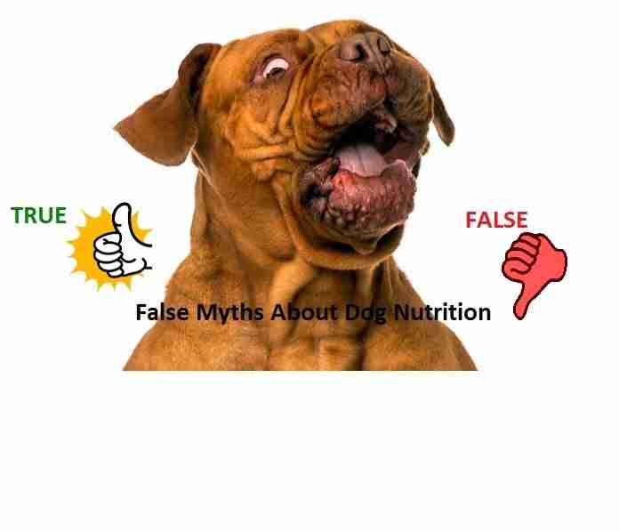 false myths about dog nutrition