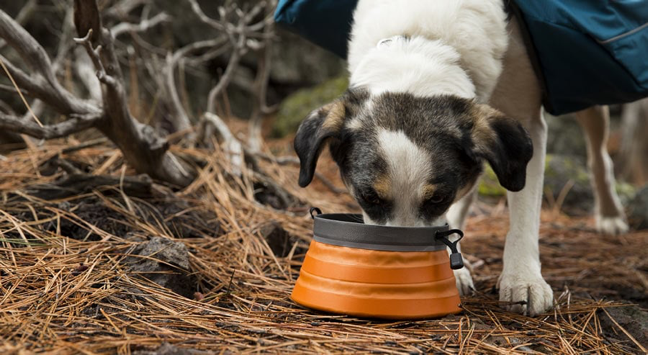 dog eating camp food