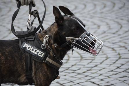 muzzle-dog