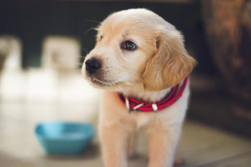puppy into an ESA