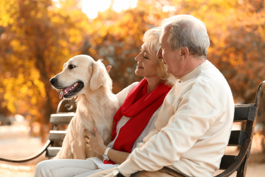 Best Emotional Support Dog Breeds for Seniors