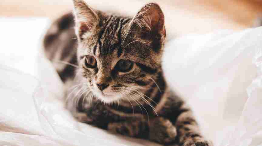 cat sense emotions