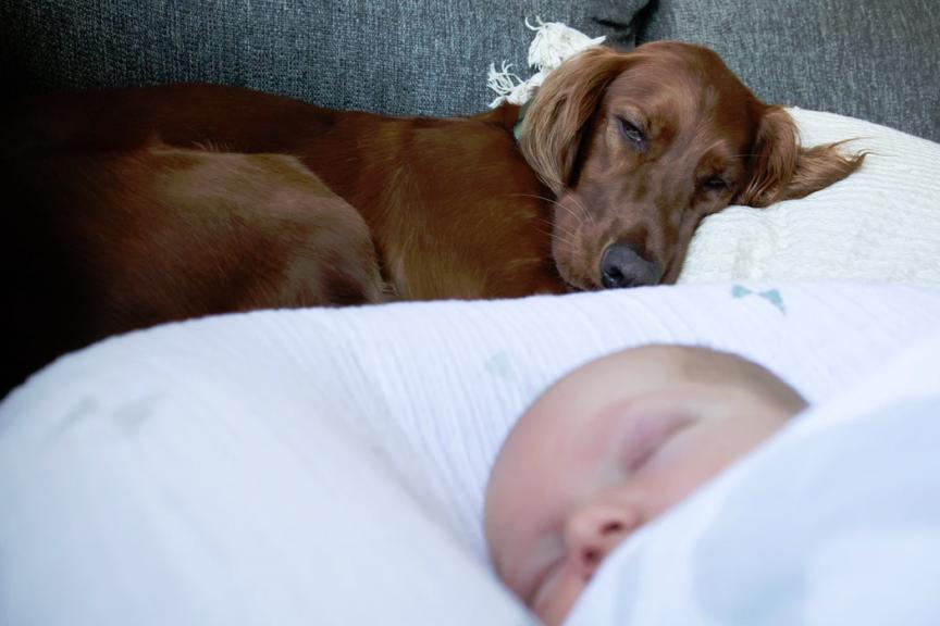 dog motherhood