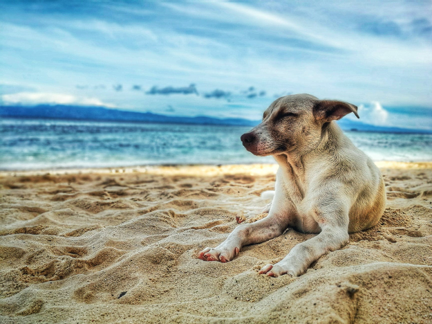dog traveling on beach