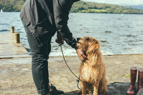 Dog emotionally attached