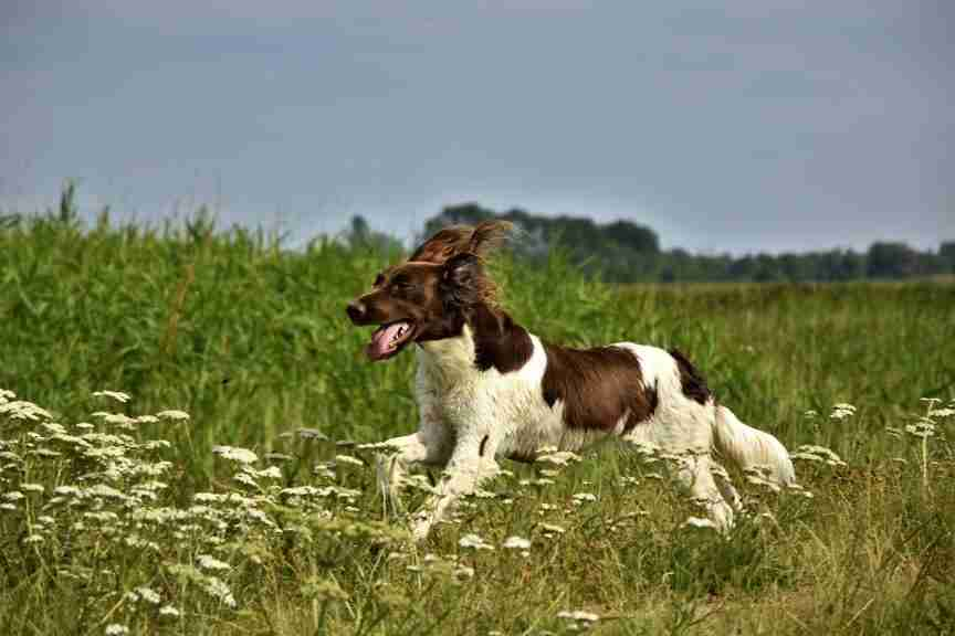 Healthy Dog Bones and Joints article
