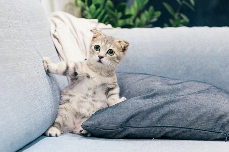 cat and couch