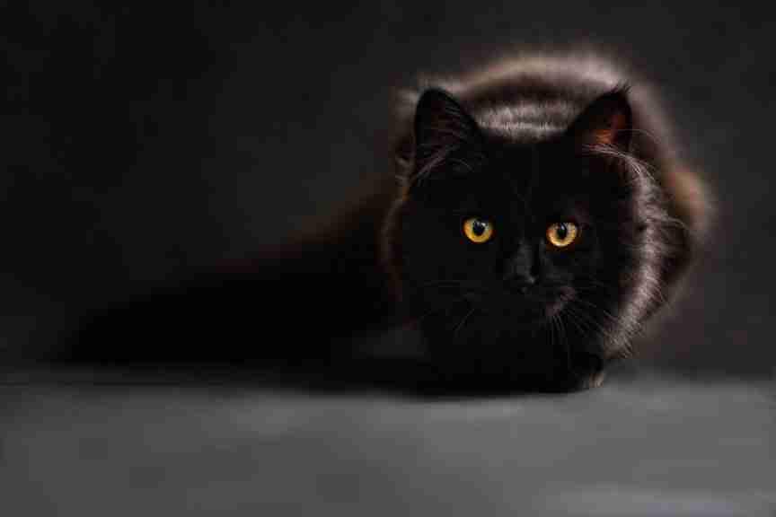 cat covid19