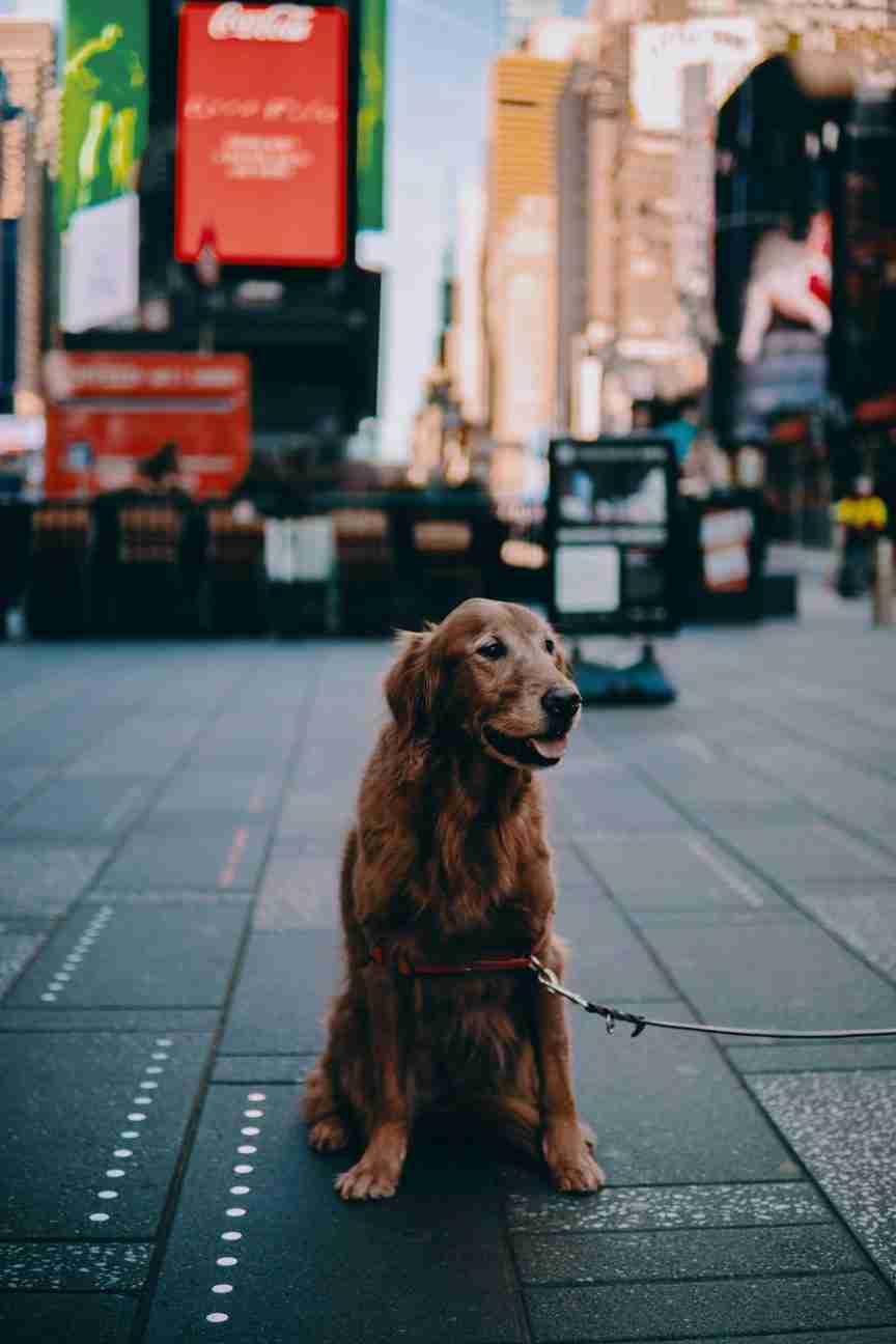 dog during pandemic