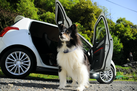dog and car seats