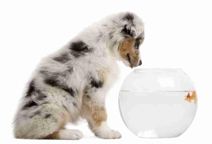 dog fish tank