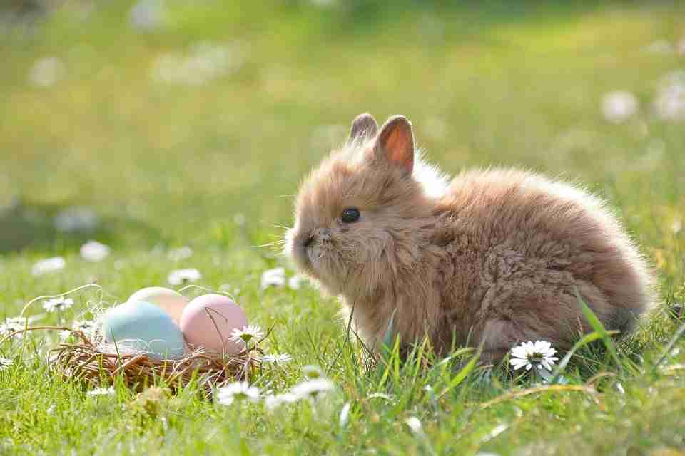 bunny-resting-on-grass