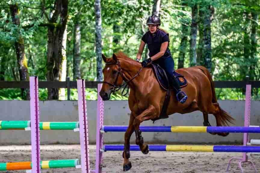cbd oil horses