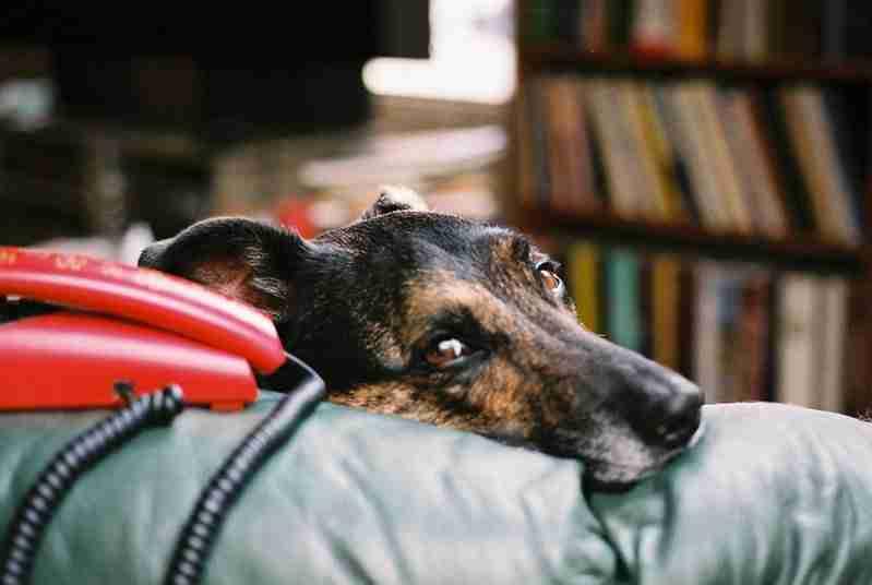 dog depression cure