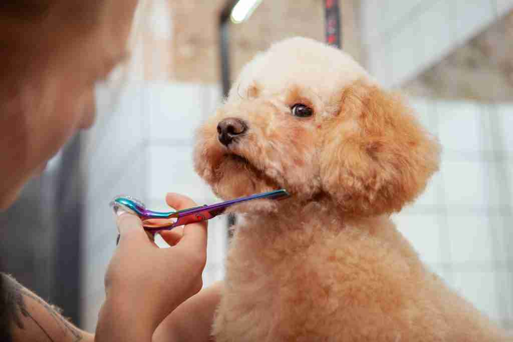 dog hair healthy