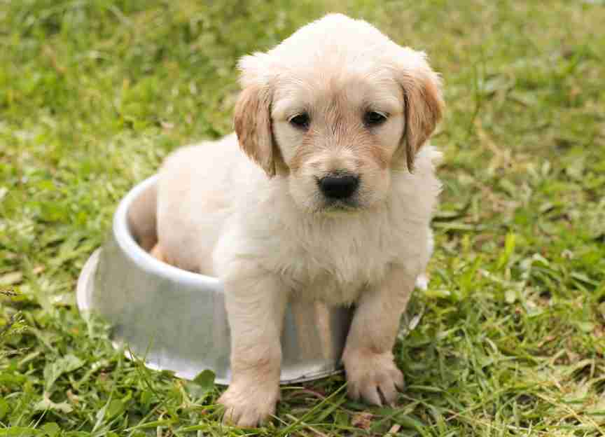 dog in a bowl