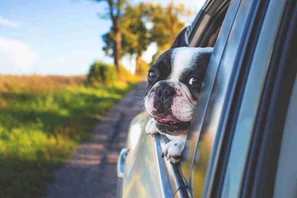 dog-in-a-car