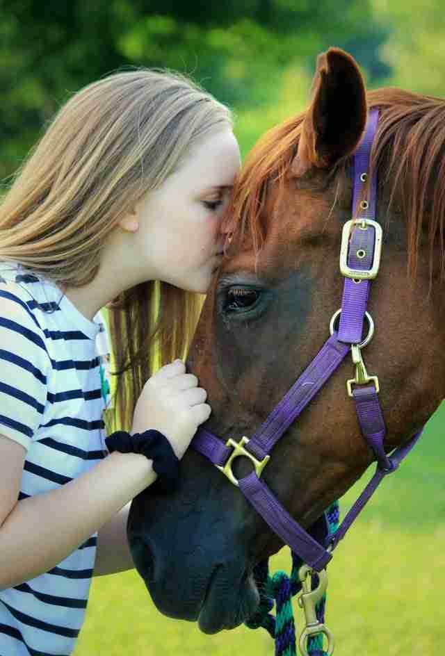 horses cbd oil health