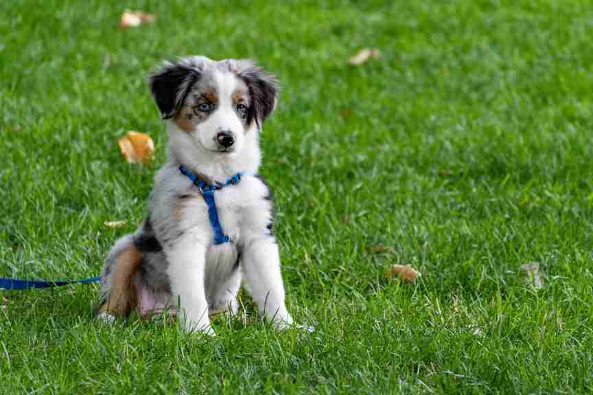 puppy-on-grass-field