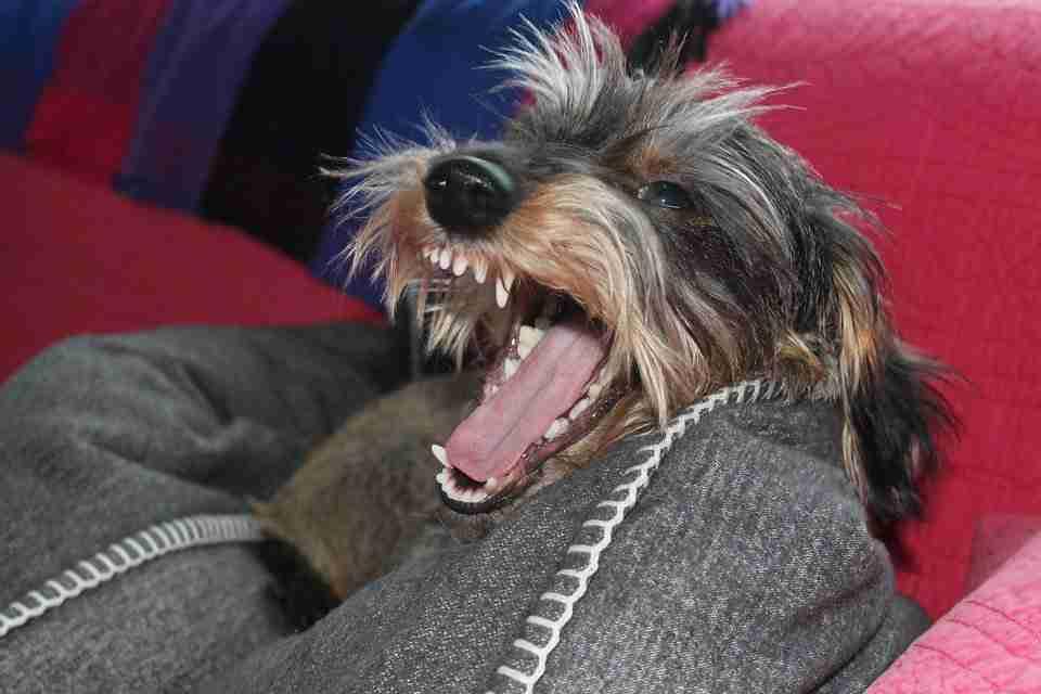 unrest dog